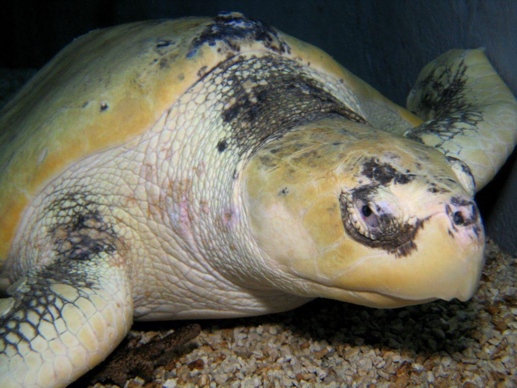 jenkinsons-aquarium-turtle-ace