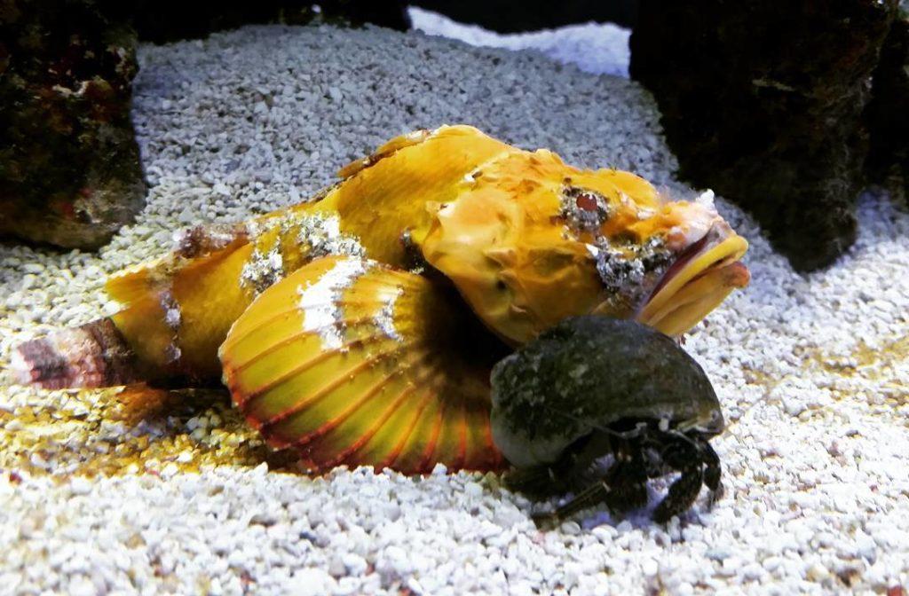 jenkinsons-aquarium-hermit-crab