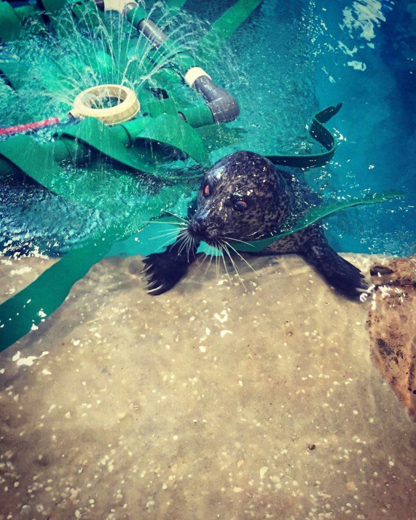 jenkinsons-aquarium-seal