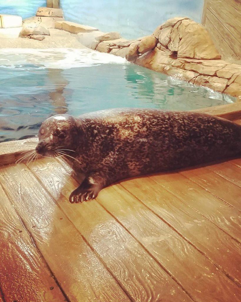 jenkinsons-aquarium-seal2
