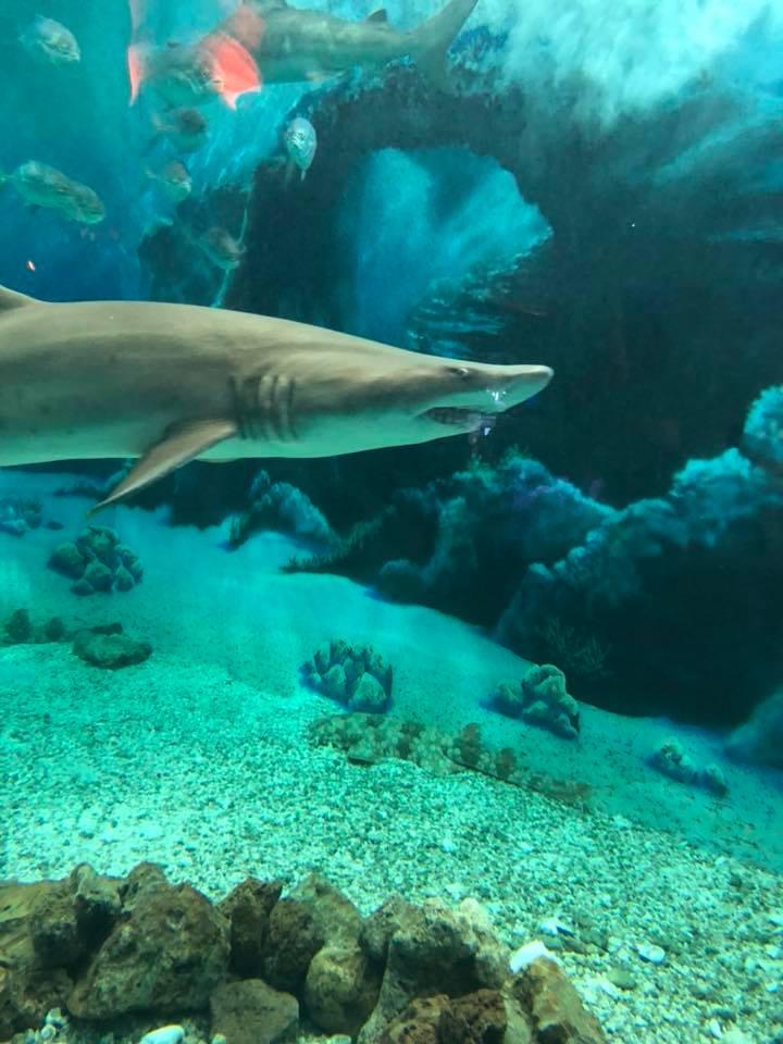 jenkinsons-aquarium-shark