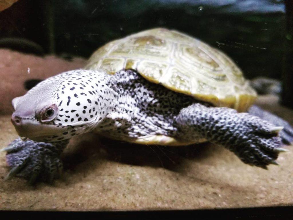jenkinsons-aquarium-turtle