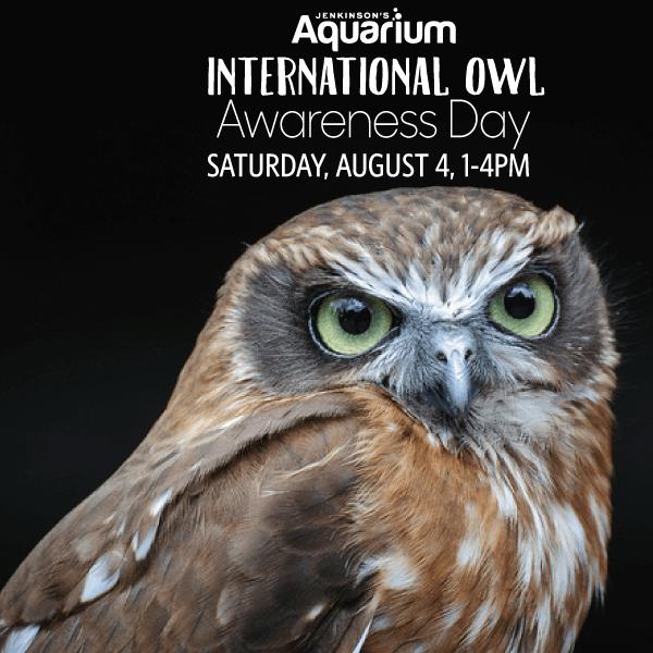 Aquarium S International Owl Awareness Day Boardwalk